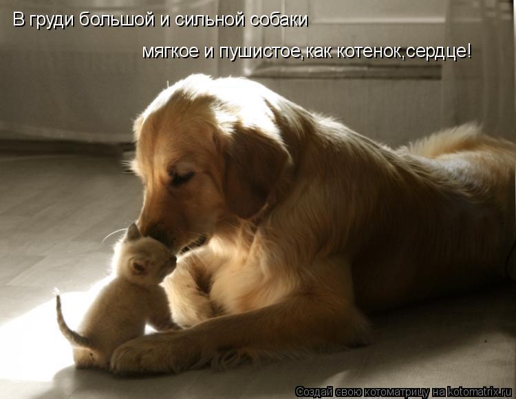 Котоматрица: В груди большой и сильной собаки мягкое и пушистое,как котенок,сердце!