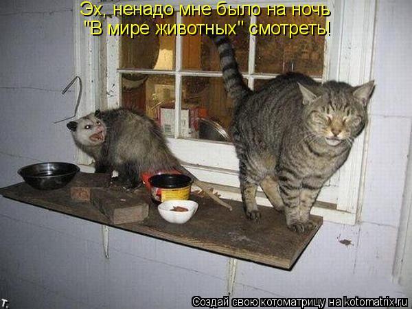 """Котоматрица: """"В мире животных"""" смотреть! Эх, ненадо мне было на ночь"""