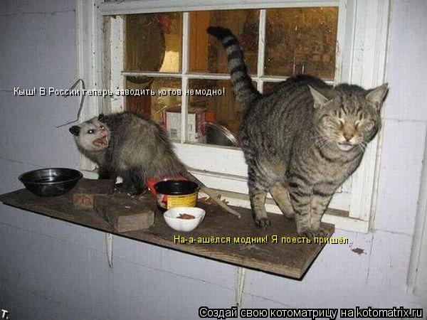 Котоматрица: Кыш! В России теперь заводить котов немодно! На-а-ашёлся модник! Я поесть пришёл.