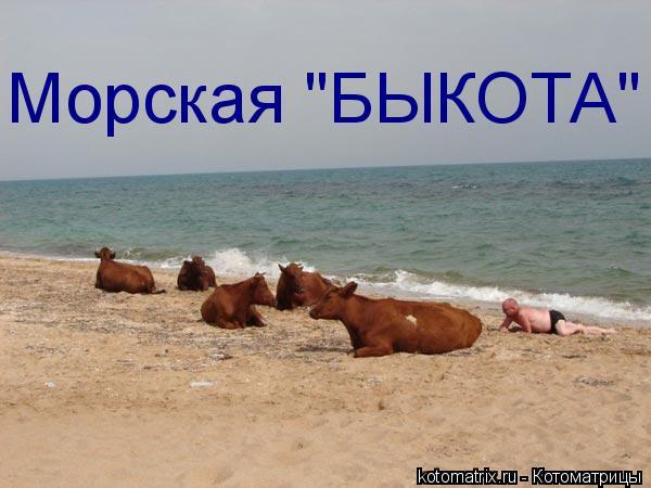 "Котоматрица: Морская ""БЫКОТА"""