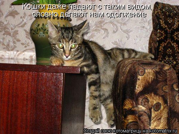 Котоматрица - Кошки даже падают с таким видом, словно делают нам одолжение