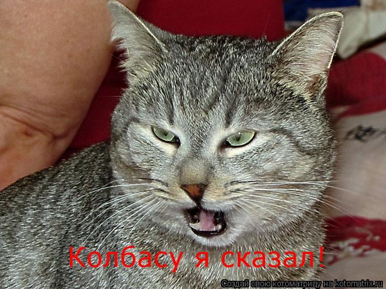 Котоматрица: Колбасу я сказал!