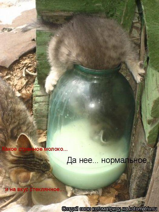 Котоматрица: Какое странное молоко... и на вкус стеклянное... Да нее... нормальное...
