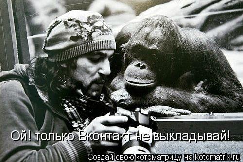 Котоматрица: Ой! только Вконтакт не выкладывай!