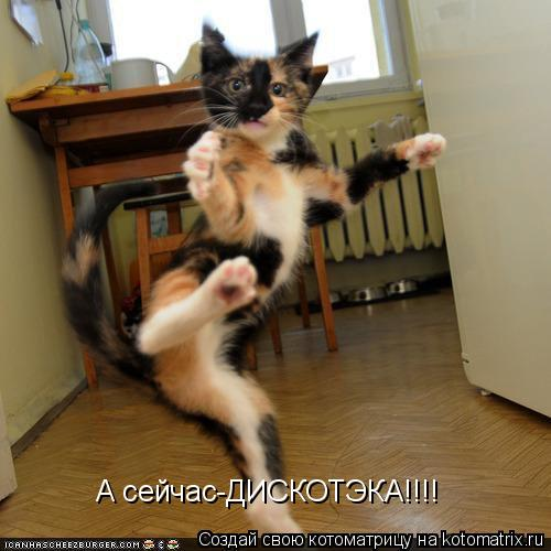 Котоматрица: А сейчас-ДИСКОТЭКА!!!!