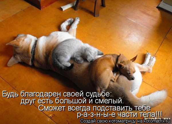 Котоматрица - Будь благодарен своей судьбе: друг есть большой и смелый. Сможет всегд