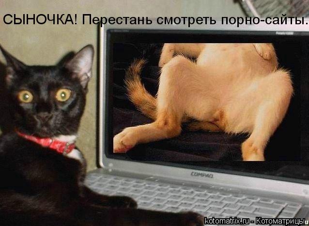 Котоматрица: СЫНОЧКА! Перестань смотреть порно-сайты....