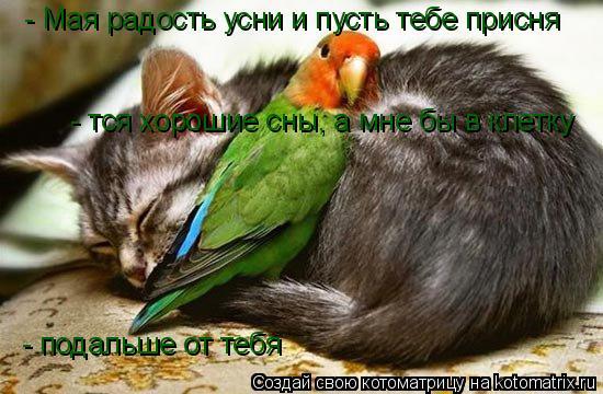 Котоматрица: - Мая радость усни и пусть тебе присня - тся хорошие сны, а мне бы в клетку - подальше от тебя