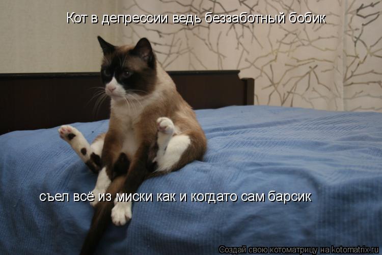 Котоматрица: Кот в депрессии ведь беззаботный бобик съел всё из миски как и когдато сам барсик