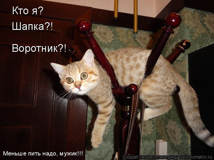 http://kotomatrix.ru/images/lolz/2011/08/18/972545.jpg
