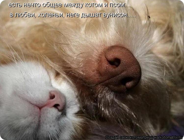 Котоматрица: есть нечто общее между котом и псом: в любви, холеньи, неге дышат вунисон.....