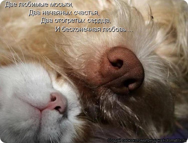 Котоматрица: Две любимые моськи, Два нечаяных счастья,  Два отогретых сердца, И бесконечная любовь....