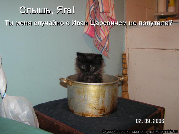Котоматрица: Слышь, Яга! Ты меня случайно с Иван Царевичем не попутала?