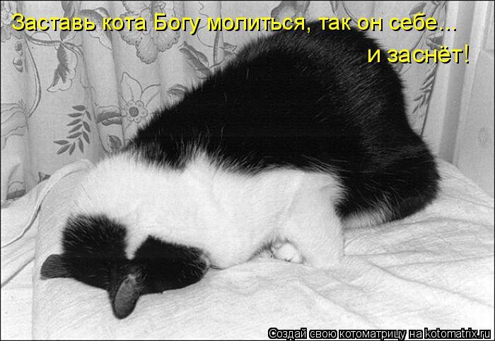 Котоматрица: Заставь кота Богу молиться, так он себе...  и заснёт!