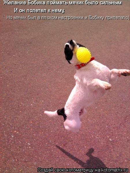 Котоматрица: Желание Бобика поймать мячик было сильным И он полетел к нему, Но мячик был в плохом настроении и Бобику прилетело)