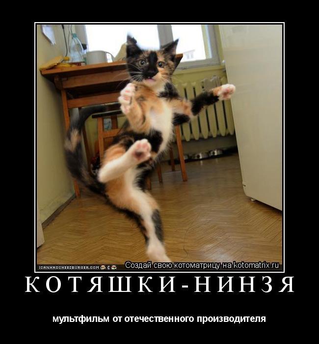 Котоматрица: Котяшки-нинзя мультфильм от отечественного производителя