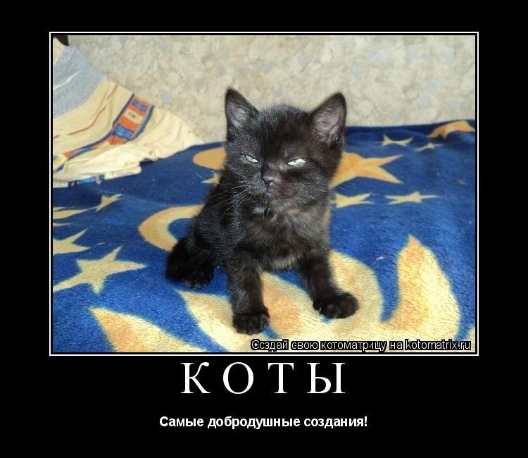 Котоматрица: Коты Самые добродушные создания!