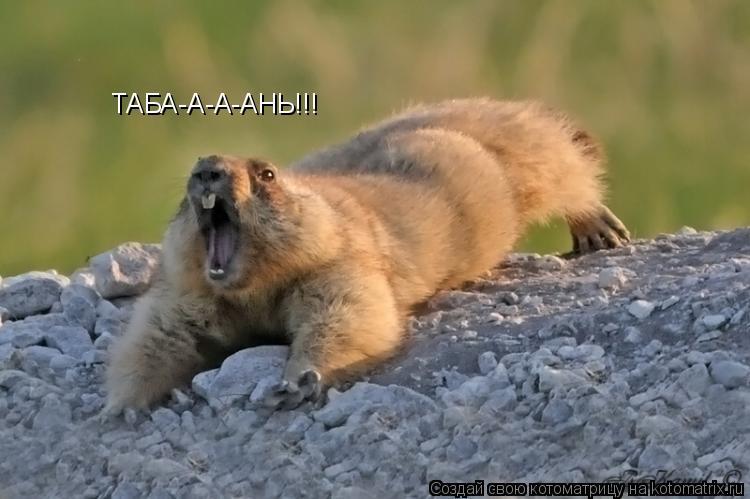 Котоматрица: ТАБА-А-А-АНЬ!!!