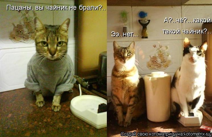 Котоматрица: Пацаны, вы чайник не брали?.. Ээ..нет... А?..чё?...какой такой чайник?..