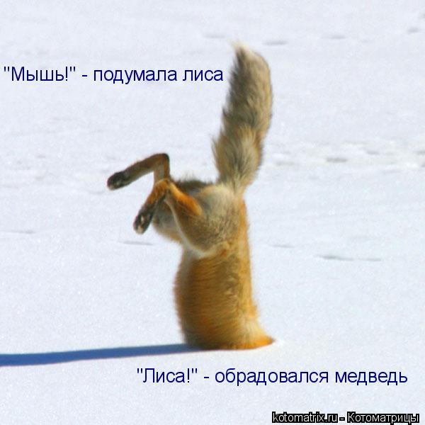 """Котоматрица: """"Мышь!"""" - подумала лиса """"Лиса!"""" - обрадовался медведь"""