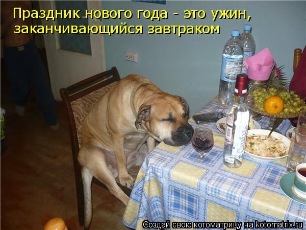 Котоматрица: Праздник нового года - это ужин, заканчивающийся завтраком