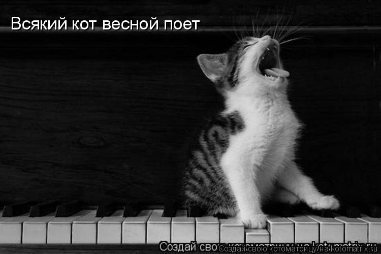 Котоматрица: Всякий кот весной поет
