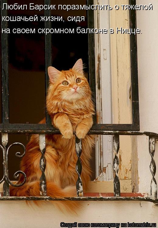 Котоматрица: Любил Барсик поразмыслить о тяжелой кошачьей жизни, сидя  на своем скромном балконе в Ницце.