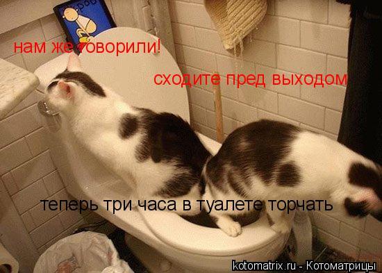 Котоматрица: нам же говорили! сходите пред выходом  теперь три часа в туалете торчать