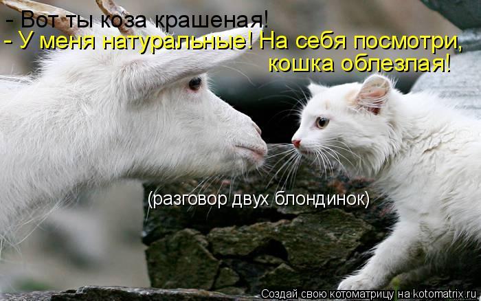 Котоматрица: (разговор двух блондинок) - Вот ты коза крашеная! - У меня натуральные! На себя посмотри,  кошка облезлая!
