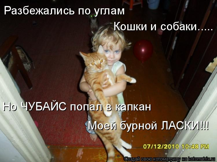 Котоматрица: Разбежались по углам Кошки и собаки..... Но ЧУБАЙС попал в капкан Моей бурной ЛАСКИ!!!