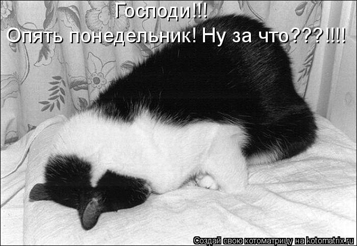 Котоматрица: Господи!!!  Опять понедельник! Ну за что???!!!!