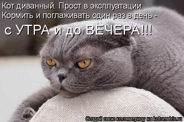 Котоматрица: Кот диванный. Прост в эксплуатации. Кормить и поглаживать один раз в день - с УТРА и до ВЕЧЕРА!!!