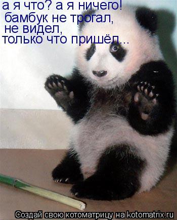 Котоматрица: а я что? а я ничего! бамбук не трогал,  не видел, только что пришёл...