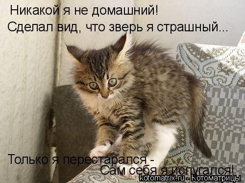 Котоматрица: Никакой я не домашний! Сделал вид, что зверь я страшный... Только я перестарался -  Сам себя я испугался!
