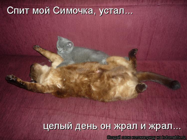 Котоматрица: Спит мой Симочка, устал... целый день он жрал и жрал...