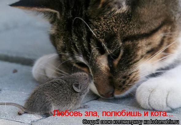 Котоматрица: Любовь зла, полюбишь и кота... Любовь зла, полюбишь и кота...