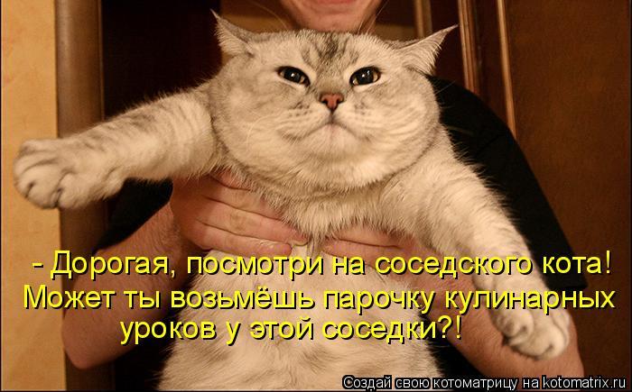 Котоматрица: - Дорогая, посмотри на соседского кота! Может ты возьмёшь парочку кулинарных уроков у этой соседки?!