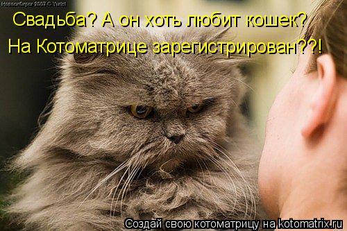 Котоматрица: Свадьба? А он хоть любит кошек? На Котоматрице зарегистрирован??!