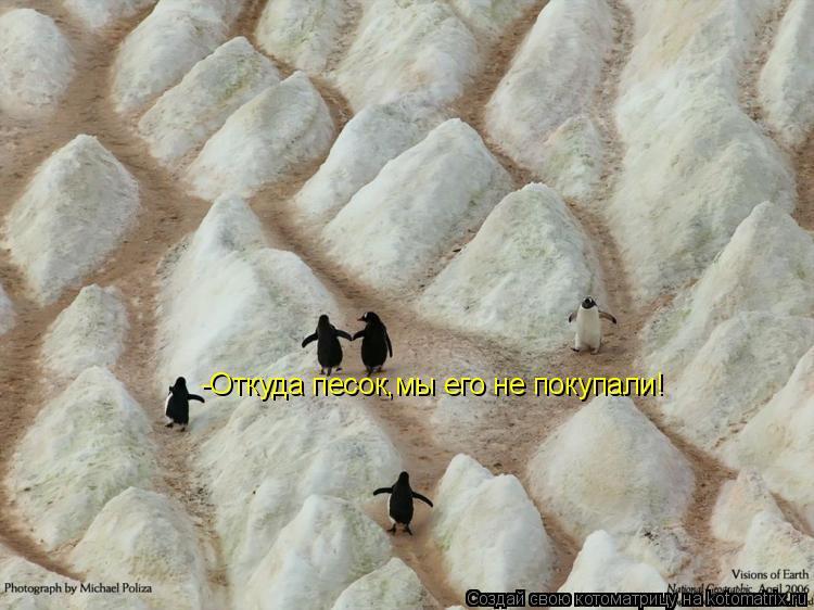 Котоматрица: -Откуда песок,мы его не покупали!