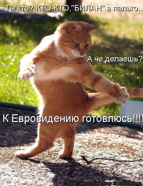 """Котоматрица: Ты кто? КТО-КТО,""""БИЛАН"""" в пальто.... А че делаешь? К Евровидению готовлюсь!!!!"""