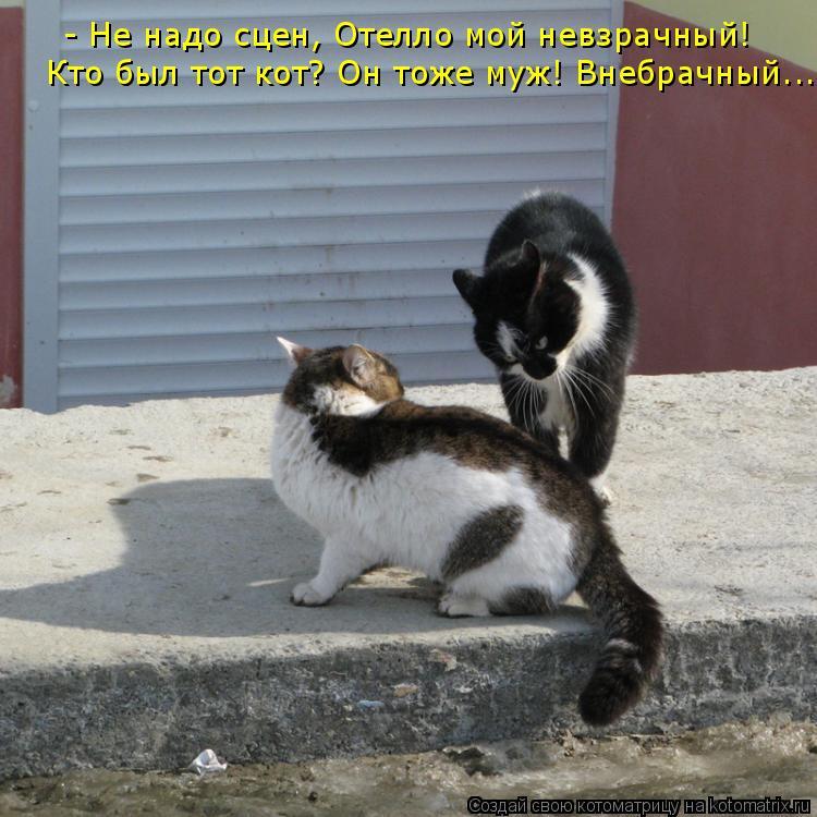 Котоматрица: - Не надо сцен, Отелло мой невзрачный!  Кто был тот кот? Он тоже муж! Внебрачный...