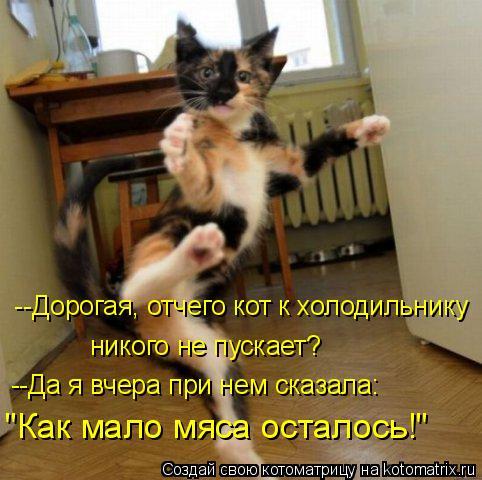"""Котоматрица: никого не пускает? """"Как мало мяса осталось!""""  --Дорогая, отчего кот к холодильнику --Да я вчера при нем сказала:"""