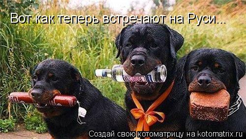 Котоматрица: Вот как теперь встречают на Руси...