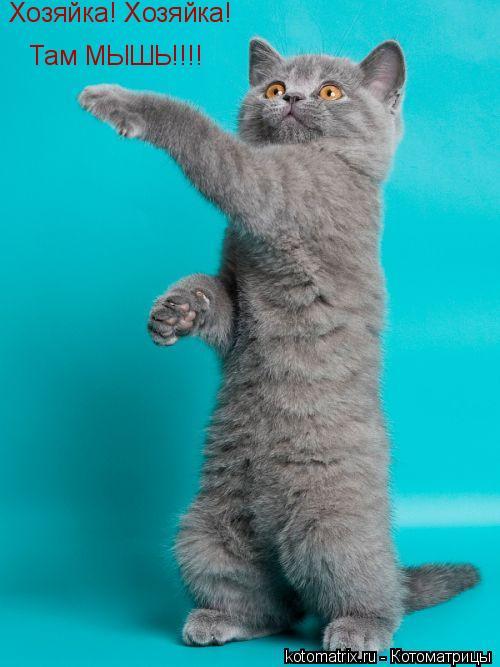 Котоматрица: Хозяйка! Хозяйка! Там МЫШЬ!!!!