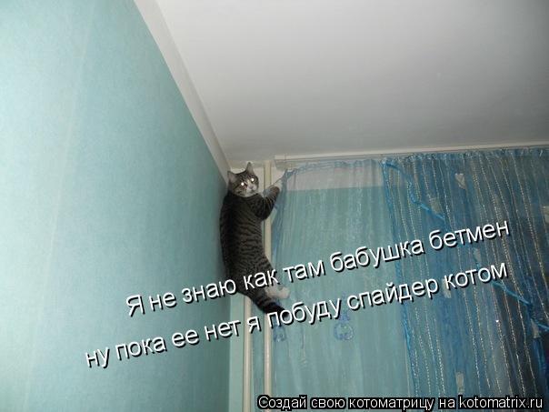 Котоматрица: Я не знаю как там бабушка бетмен ну пока ее нет я побуду спайдер котом