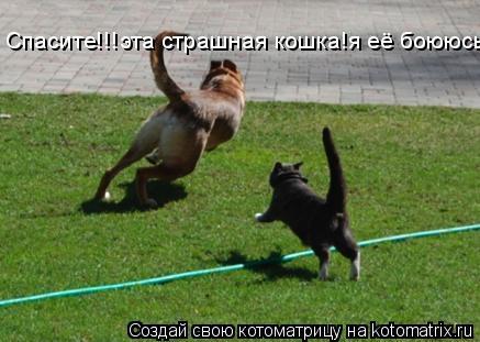 Котоматрица: Спасите!!!эта страшная кошка!я её боююсьь!!!