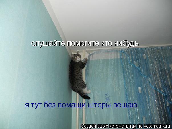 Котоматрица: слушайте помогите кто нибудь я тут без помащи шторы вешаю