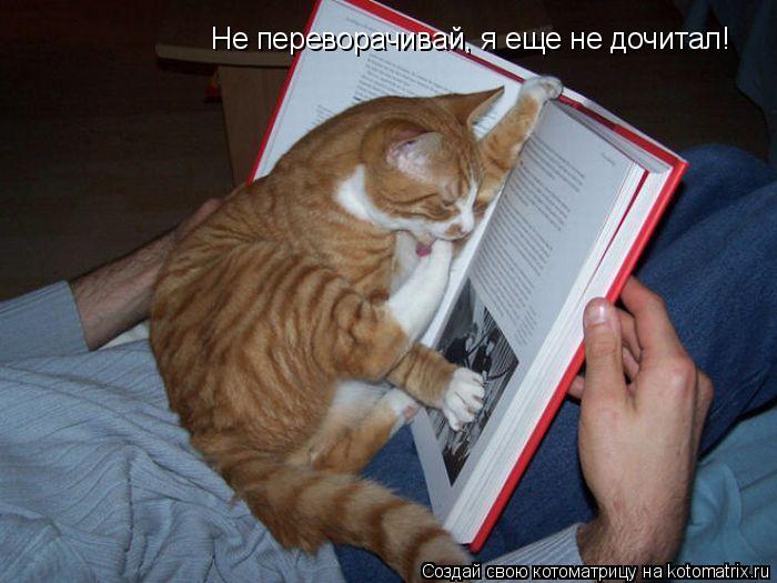 Котоматрица: Не переворачивай, я еще не дочитал!