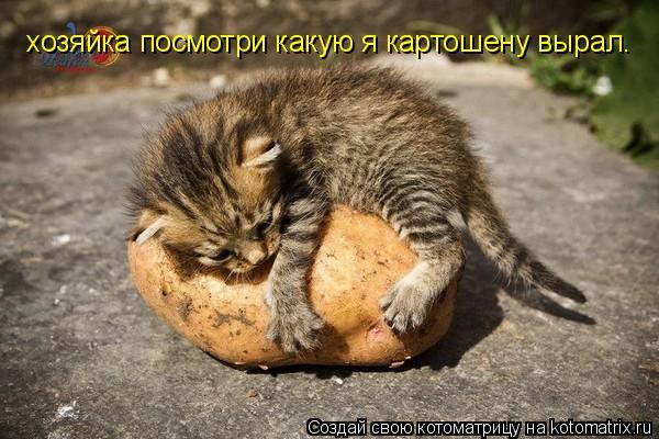Котоматрица: хозяйка посмотри какую я картошену вырал.