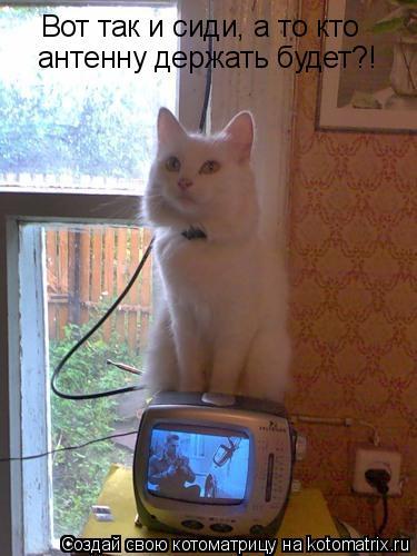 Котоматрица: Вот так и сиди, а то кто  антенну держать будет?!